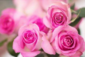 Die Sprache der Blumen @ Mühlentreff