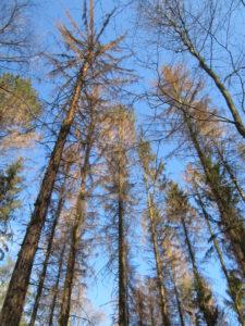"""""""Unser Wald im Klimawandel"""" @ Mühlentreff"""
